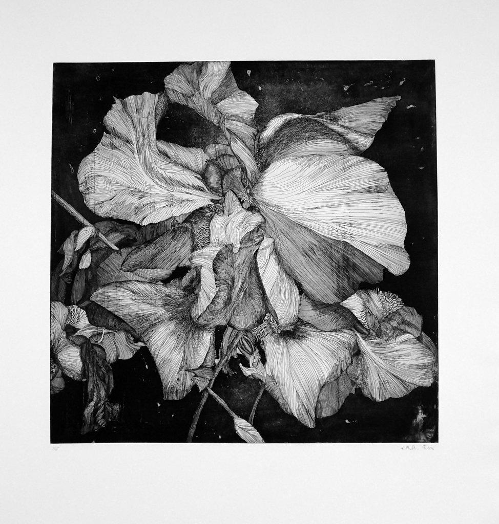 """Iris germanica"""